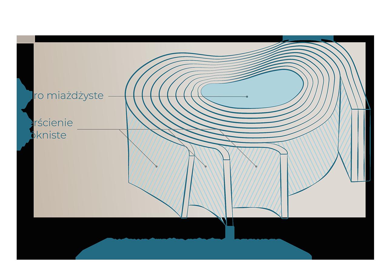 budowa krazka miedzykregowego jadro miazdzyste pierscienie wlokniste