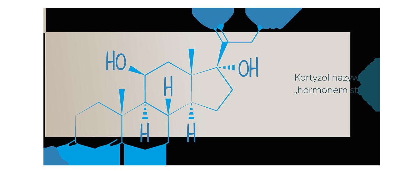 garb hormony kortyzol